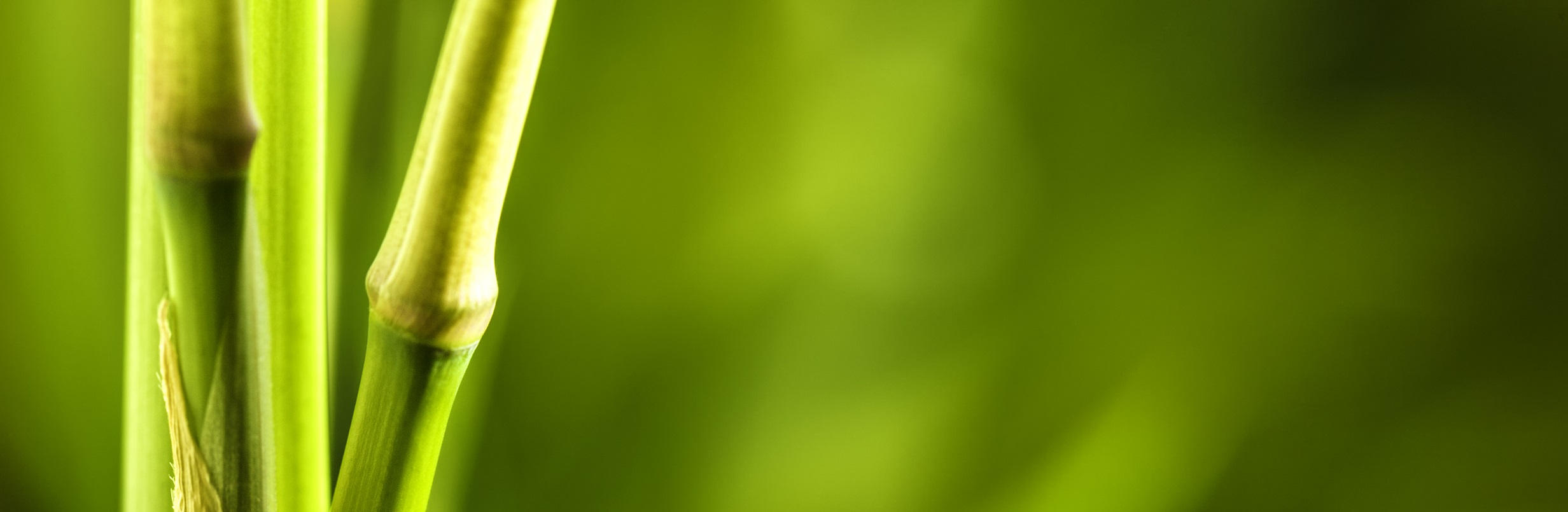 Bamboo leaves on natural background
